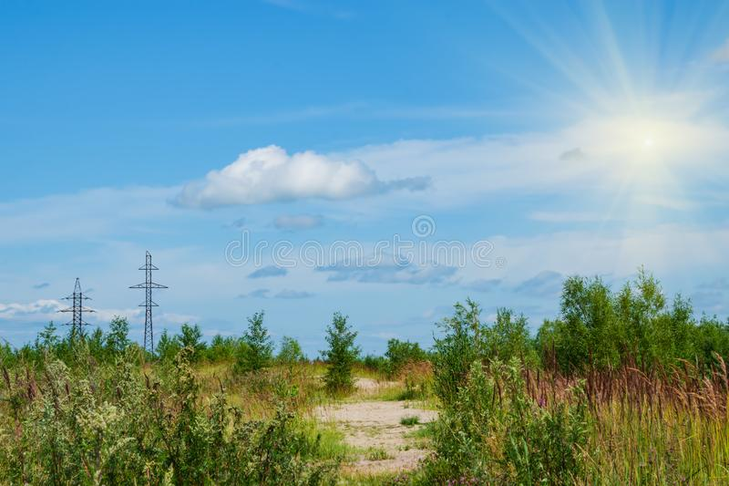 Yellow meadow, wildflowers, yarrow, cypress, grass in a meadow with green trees and white clouds in the blue sky  summer. Yellow meadow, wildflowers, yarrow royalty free stock photography