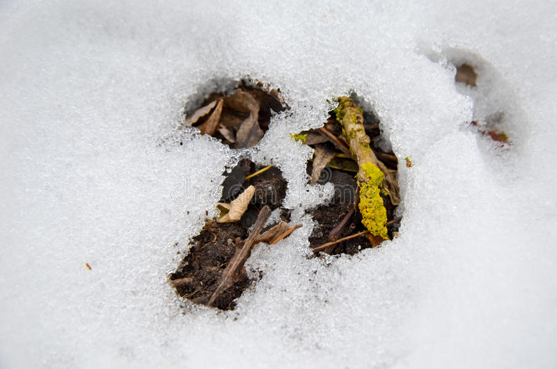 Yellow moss with layer of snow and leaves as background. In winter royalty free stock photos