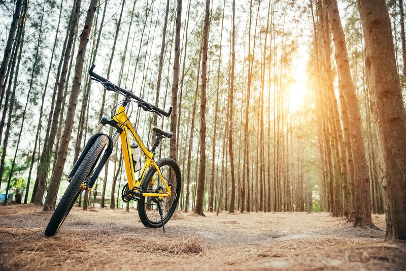 Download A yellow MTB bicycle along stock photo. Image of cyclist - 113350338