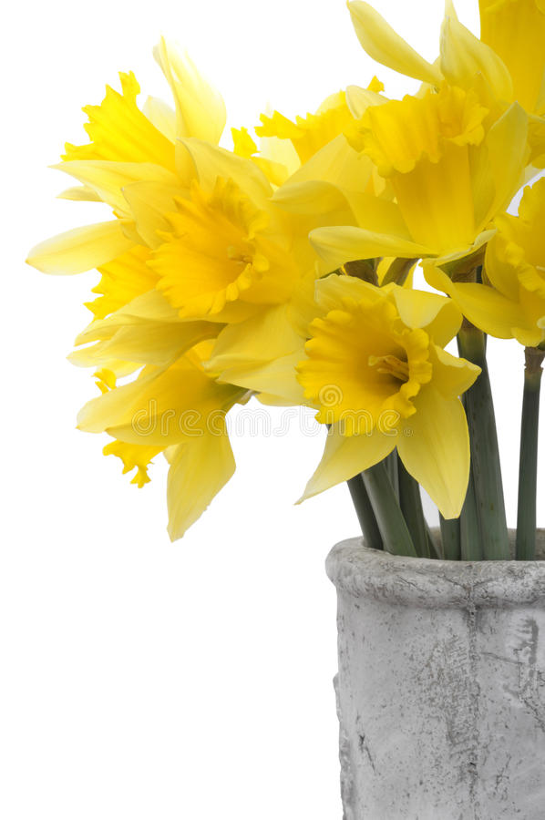 Download Yellow Narcissus flowers stock photo. Image of flowers - 13391924