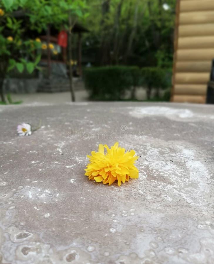yellow royaltyfri foto