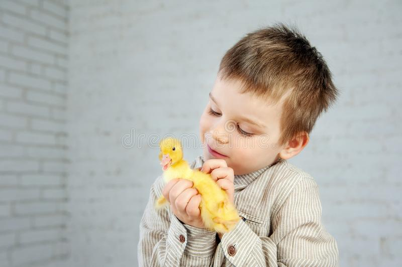 Yellow newborn duckling in the little boy`s hands on a white background royalty free stock photo