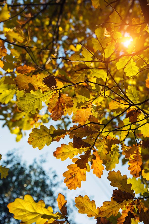 Autumn Backgrounds Stock Photos Download 73103 Royalty