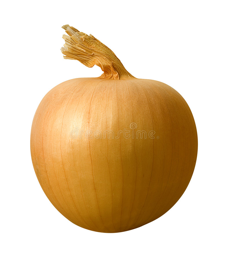 Yellow Onion. Isolated on a white background. Isolation is on a transparent layer in the PNG format stock images