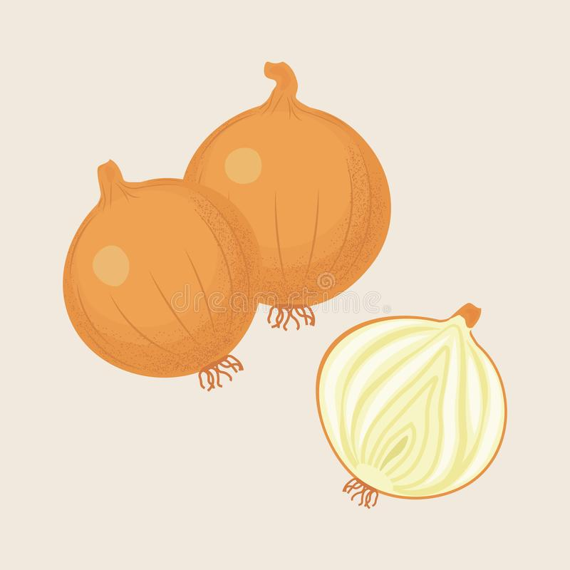 Yellow Onion and Half royalty free illustration