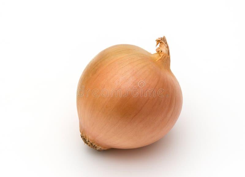 Yellow onion. On white background royalty free stock image