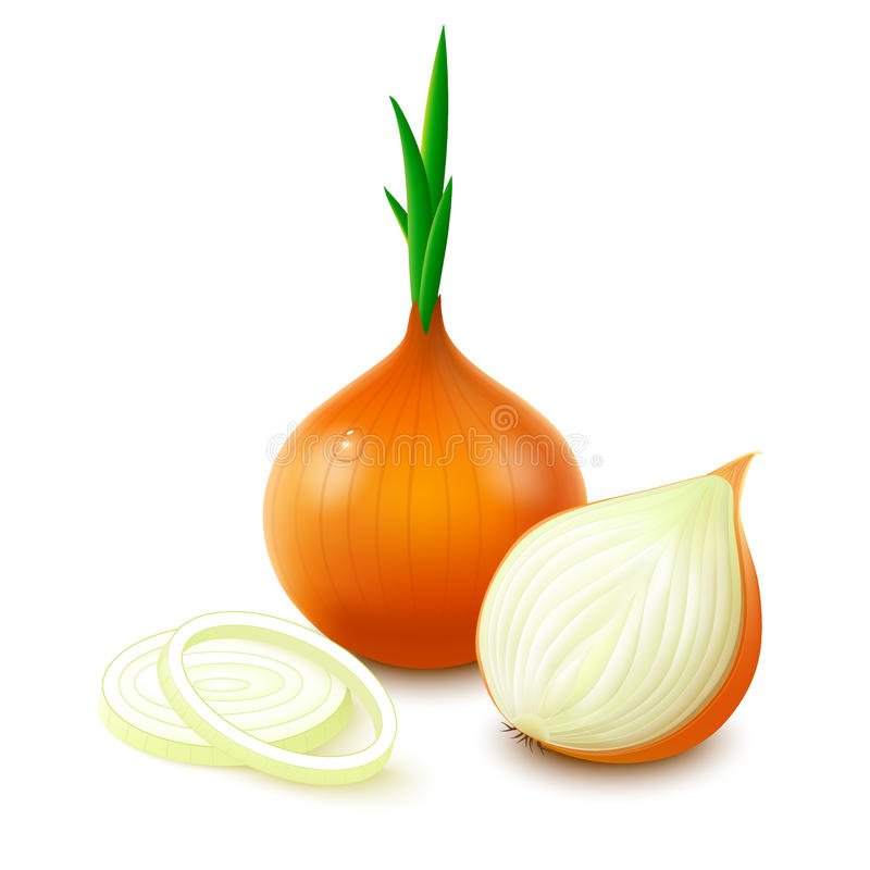 Yellow onion on white background stock illustration