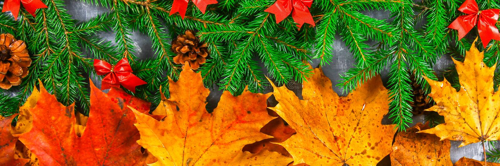 Yellow and orange autumn leaves turn into green fir branches with cones and Christmas decorations. Change of autumn for the winter royalty free stock photos
