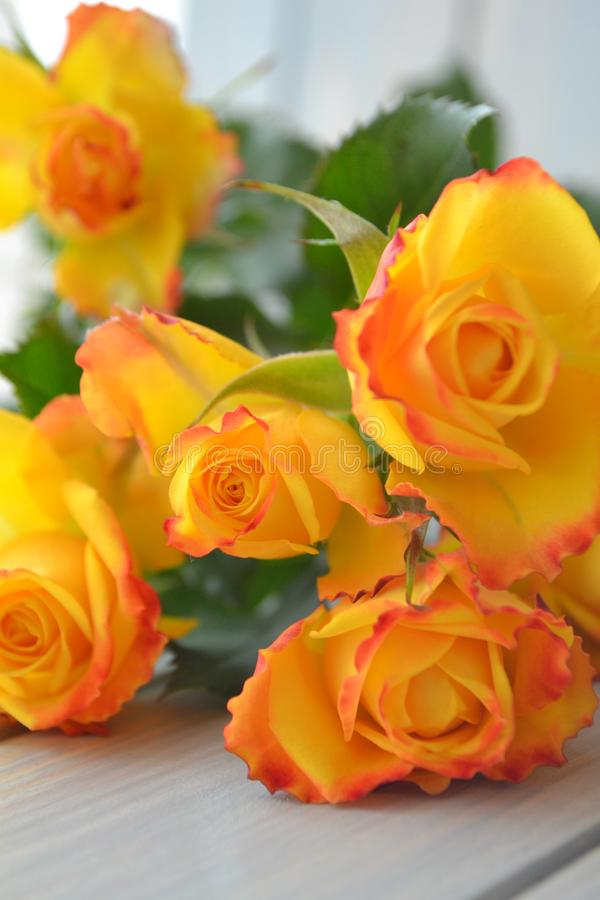 Yellow and orange bright roses bouquet on blue teal background vertical image stock image