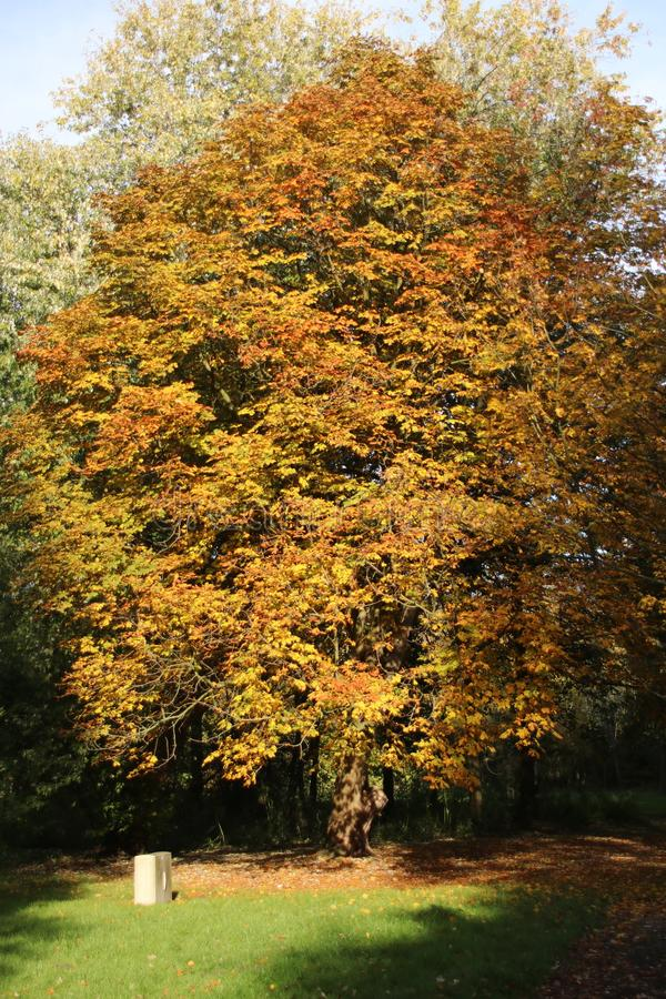 Yellow, orange and brown leaves on trees in the autumn season in public park Schakenbosch in Leidschendam. stock photography