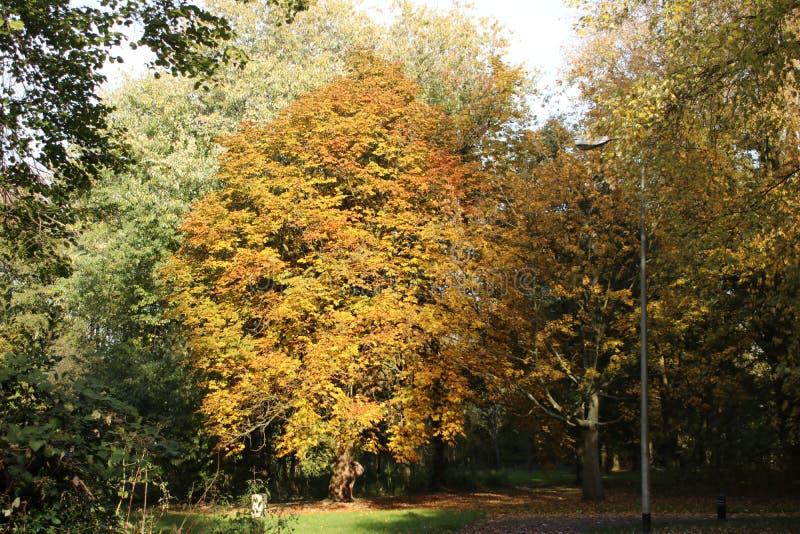 Yellow, orange and brown leaves on trees in the autumn season in public park Schakenbosch in Leidschendam. stock photo