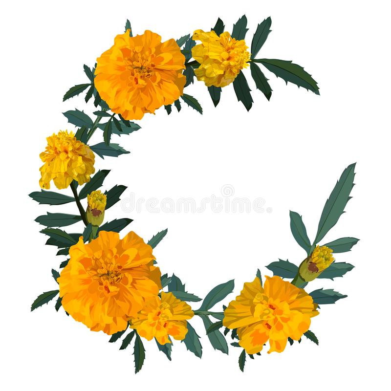 Yellow with orange flower marigold. Wreath. Vector illustration. stock image