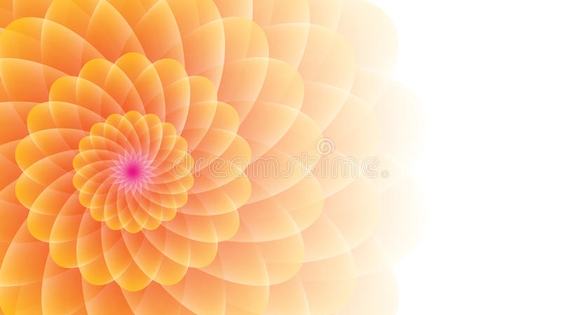 Yellow-orange flower on a wight background. stock photos