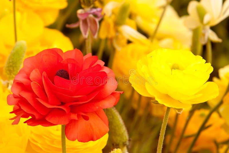 Yellow And Orange Flowers Royalty Free Stock Photos