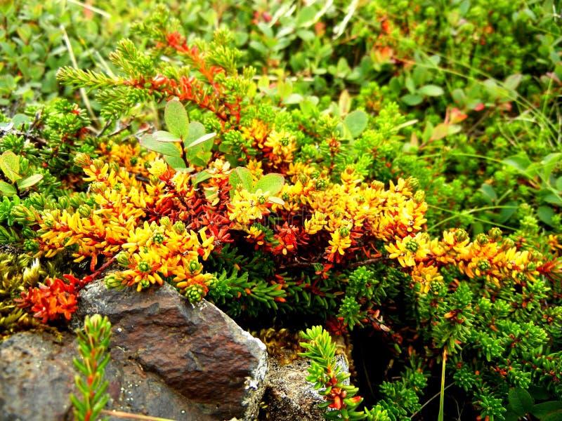 Orange Plants On Agriculture Land Stock Image - Image of ...