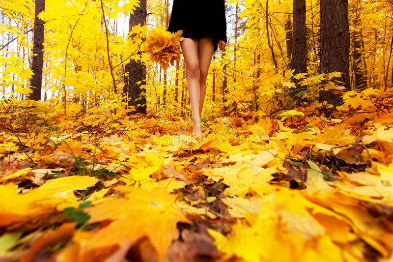 Yellow, orange and red autumn leaves in beautiful fall park. Girl with bouquet of maple leaf goes through the Park barefoot. stock photos