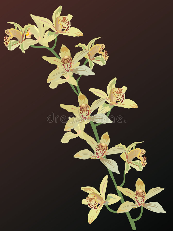 Yellow orchid flowers on brown stock illustration