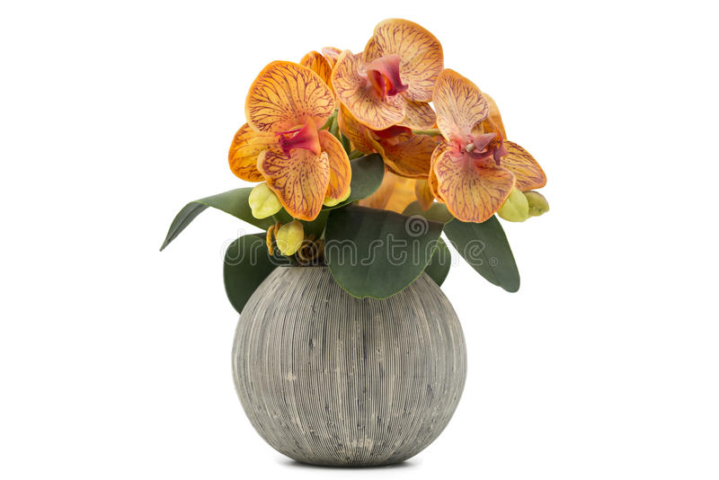Yellow orchid flowers in decorative ceramic flowerpot isolated on white stock photography