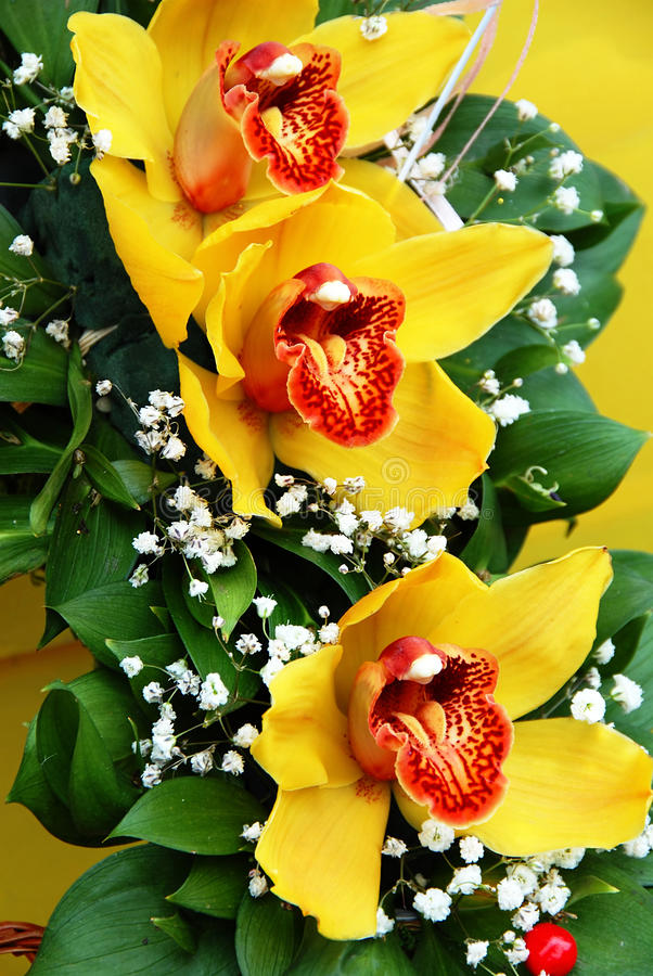 Yellow orchids royalty free stock photo