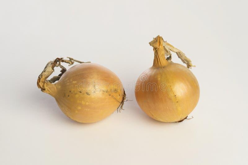 Yellow organic onions on white background stock photos