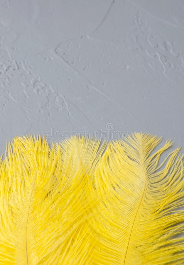 Yellow ostrich feathers. On a gray background. Texture of plaster royalty free stock photo