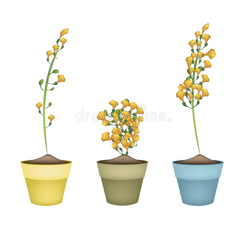 download yellow padauk flower in ceramic flower pots stock vector image
