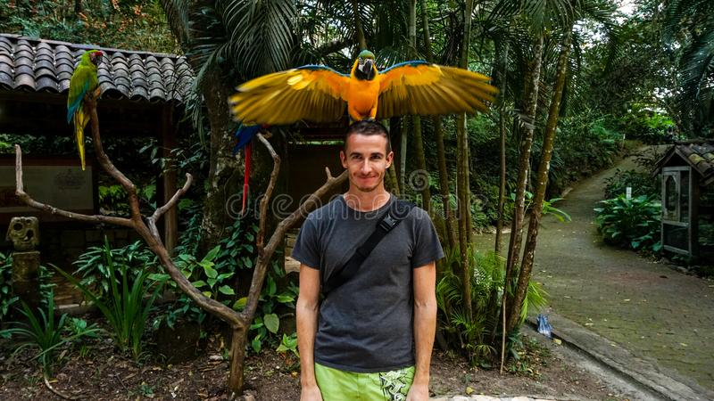 Yellow Parrot / Macaw bird on Men`s head in Macaw Mountain Bird Park, Honduras. Near copan ruins royalty free stock photo