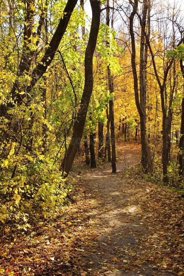 Yellow path