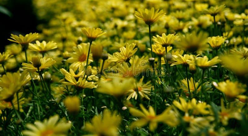 Yellow Petal Flower Field Free Public Domain Cc0 Image