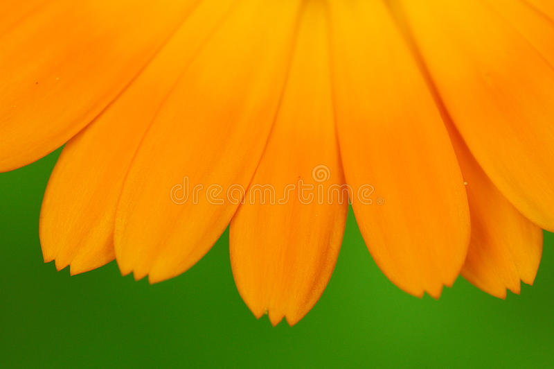 Yellow Petal Flower With Green Background Free Public Domain Cc0 Image