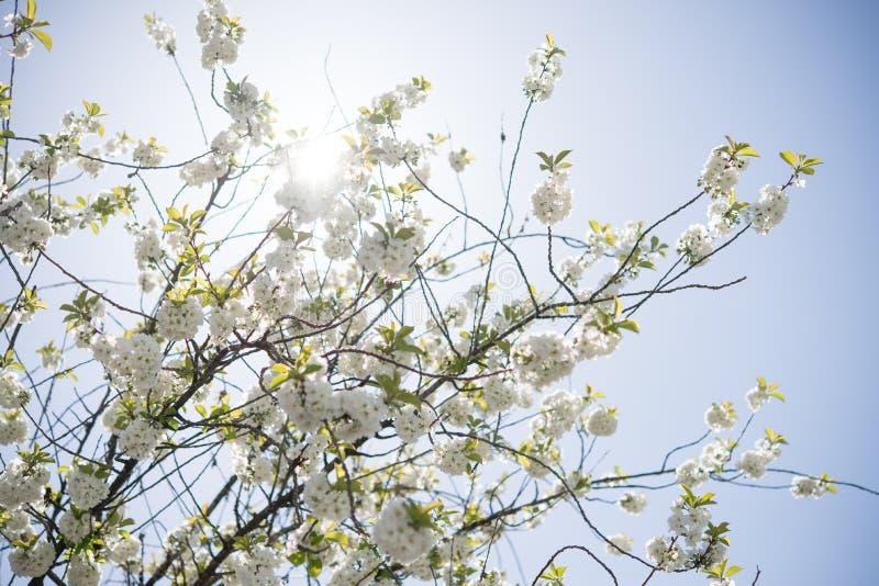 Yellow Petaled Flower Tree stock image