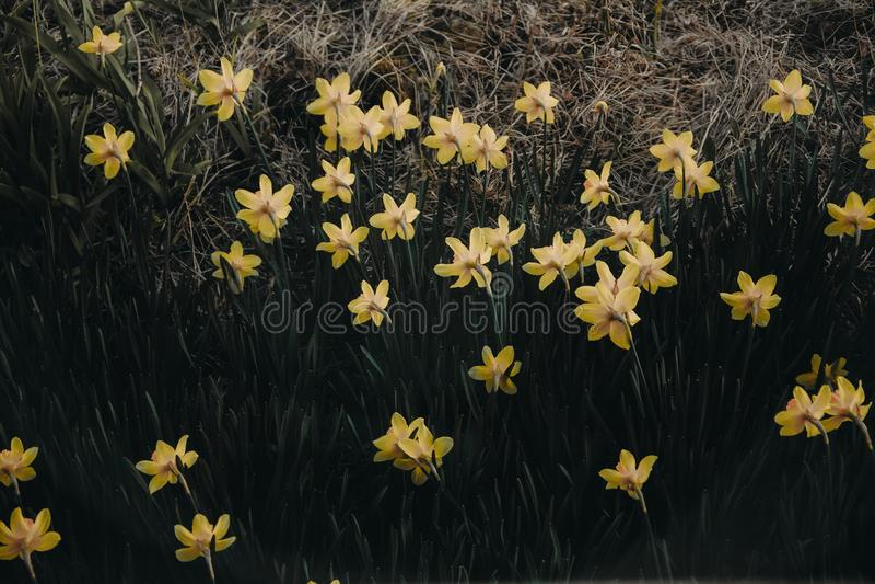 Yellow Petaled Flowers stock image