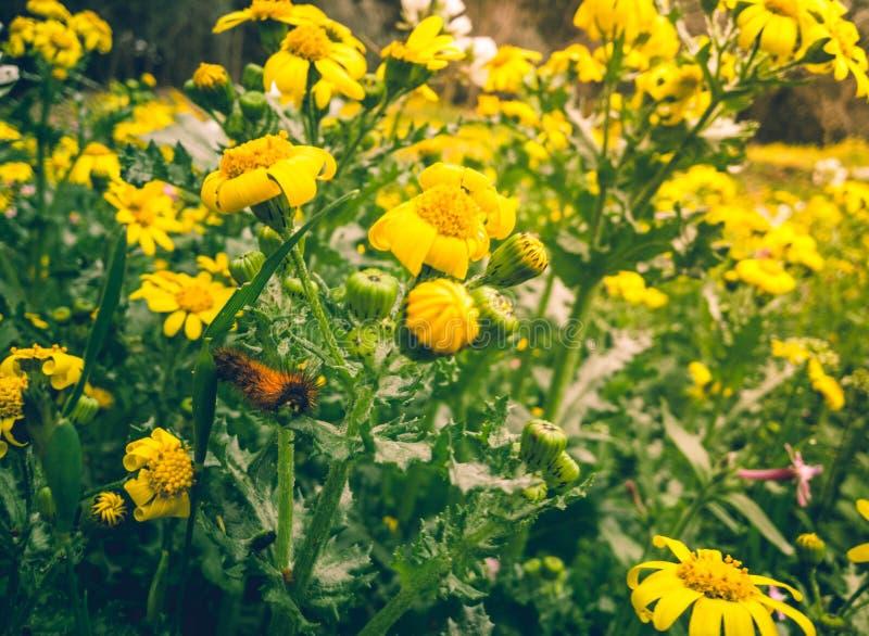 Yellow Petaled Flowers stock photos