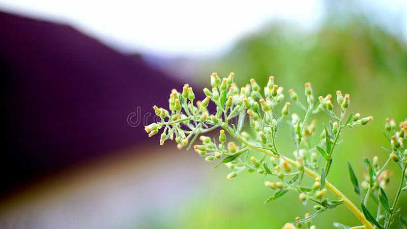 Yellow Petaled Flowers Selective-focus Photography royalty free stock image