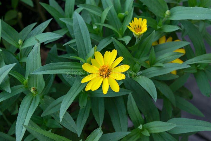 Yellow Petals stock photos