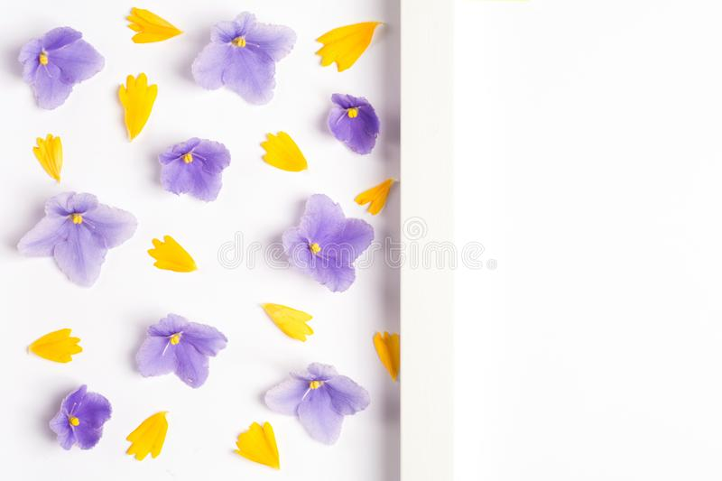 Yellow petals and violet flowers on a white background. stock photos