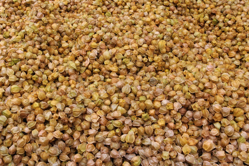 Download Yellow physalis stock image. Image of nutrition, nature - 25862949