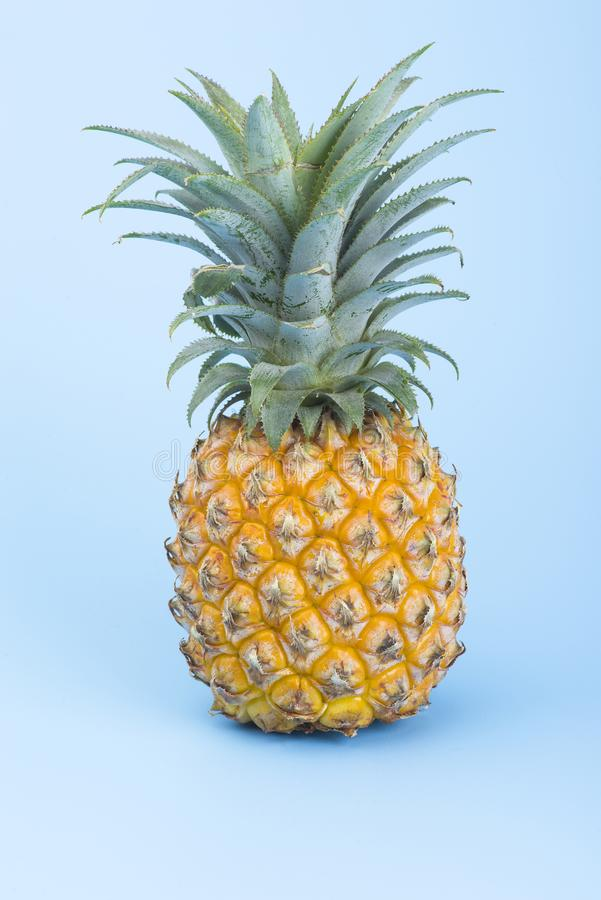 A yellow pineapple isolated on blue. Creative tropical fruit concept. A yellow pineapple isolated on blue background. Creative tropical fruit concept stock photo