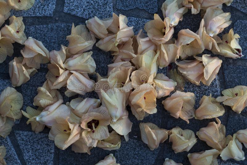 Yellow pink flowers fallen on cobbles. royalty free stock photos