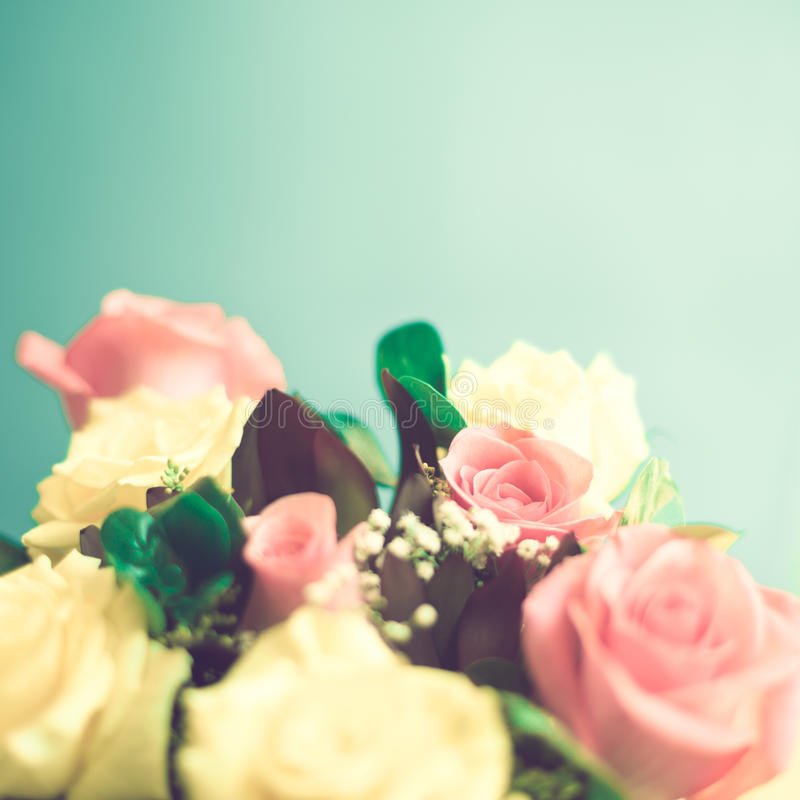 Yellow and pink roses. Pale yellow and pink roses stock image