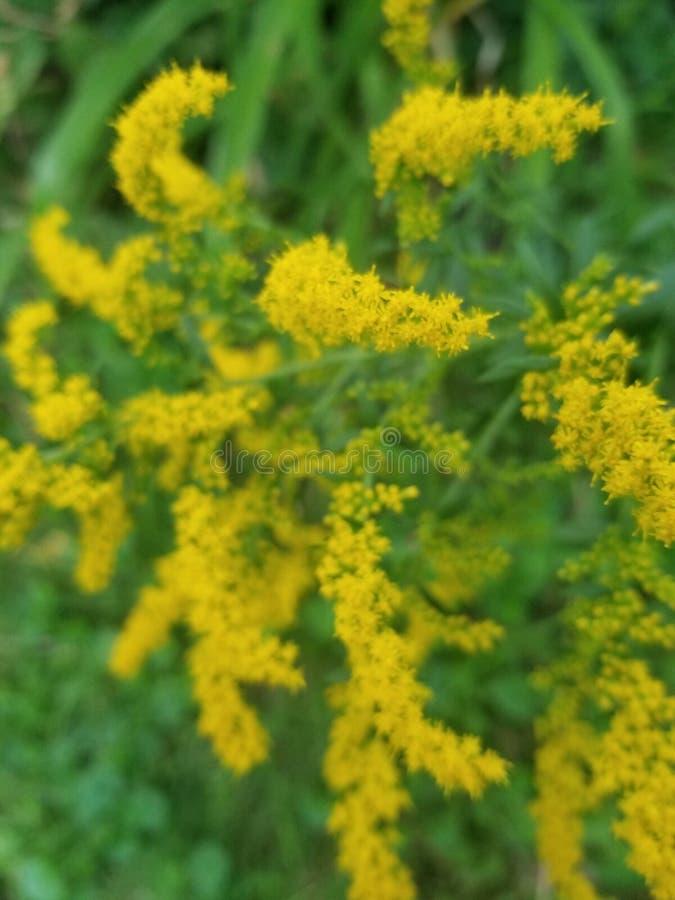 Yellow plants stock image