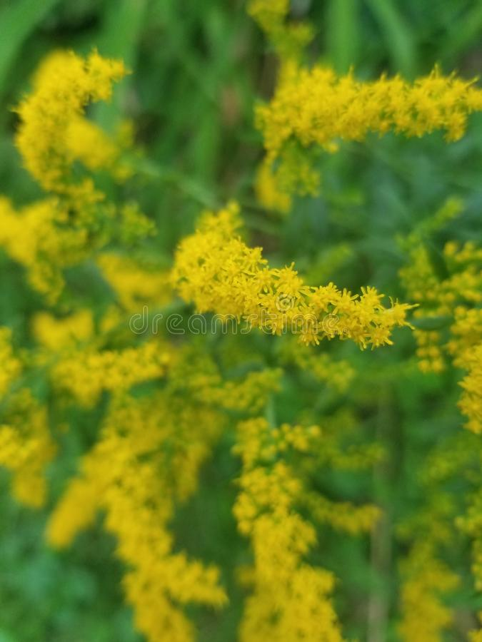 Yellow plants royalty free stock photos