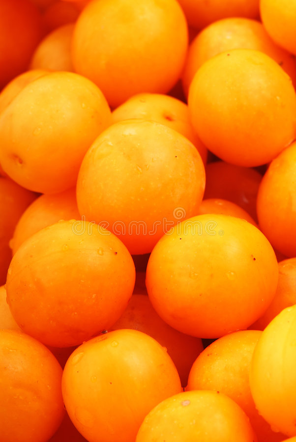 Download Yellow plum stock image. Image of dessert, colored, juicy - 6222979