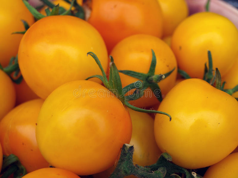 Download Yellow plum tomatoes 3 stock image. Image of overmature - 26931423