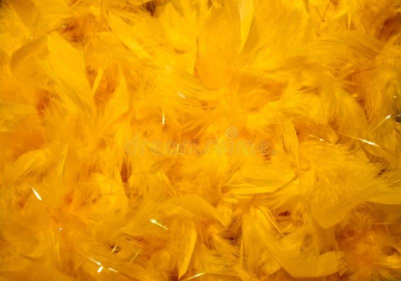 Yellow plumage background royalty free stock image