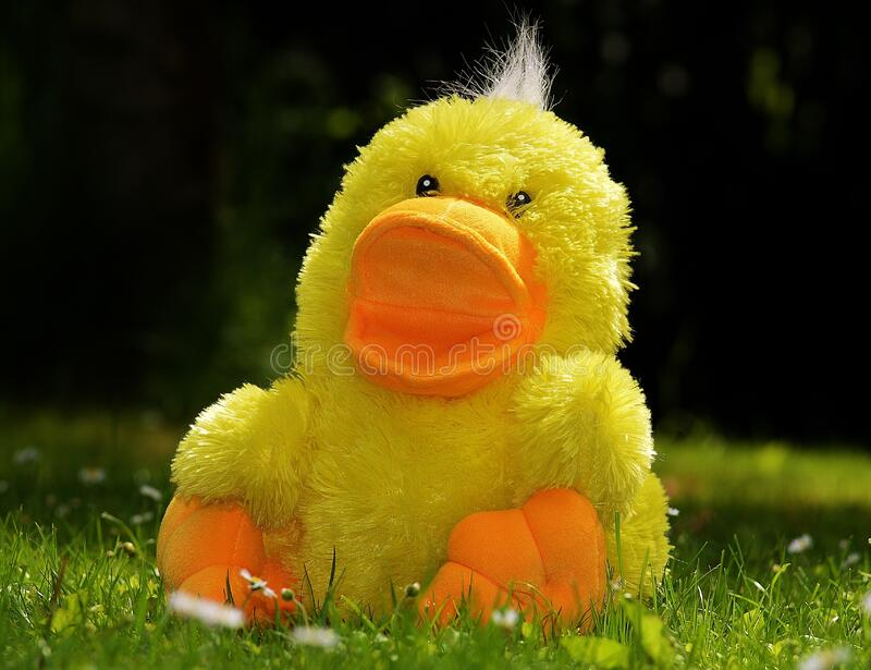 Yellow Plush Duck Toy stock photo