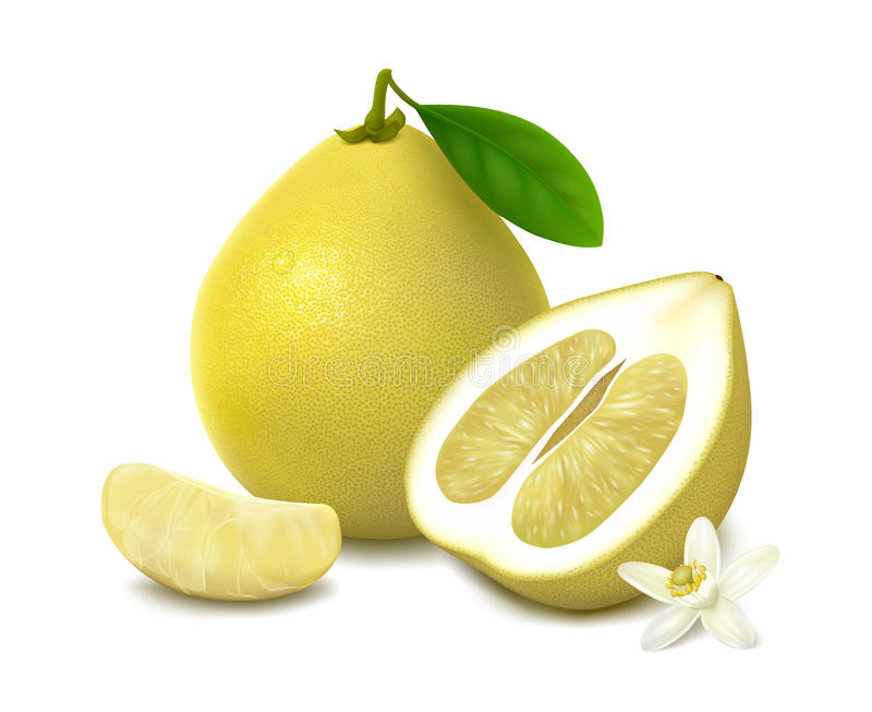 Yellow pomelo fruit on white background. Yellow shaddock with leaf, half of pomelo with white-yellow pulp, slice and flower with shadow, on white background vector illustration