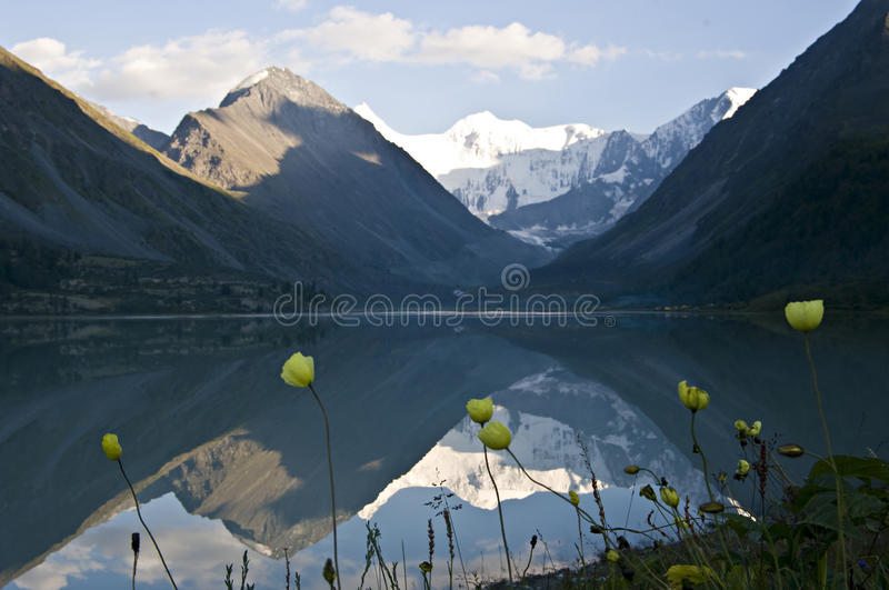 Yellow poppy at lake Ak-kem stock photo