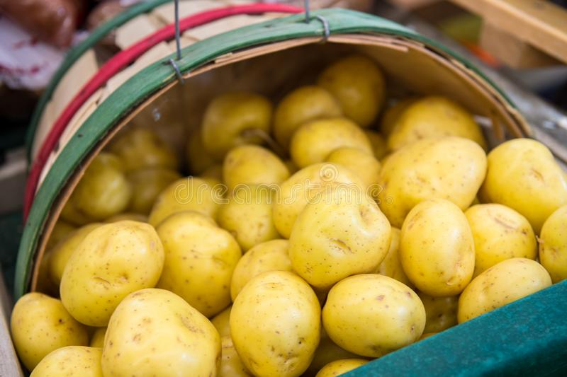 Yellow Potatoes in a basket. Yellow Potatoes in basket at farmers market stock photography