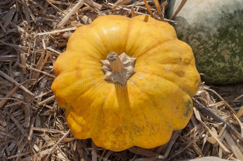 Yellow Pumpkin royalty free stock photography